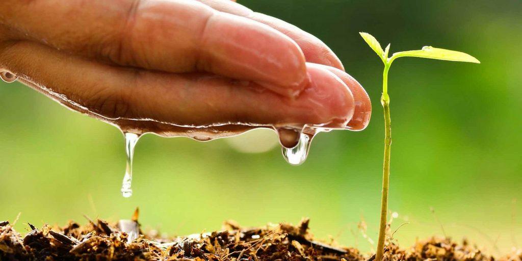 Puntos que determinan si eres responsable con el medio ambiente