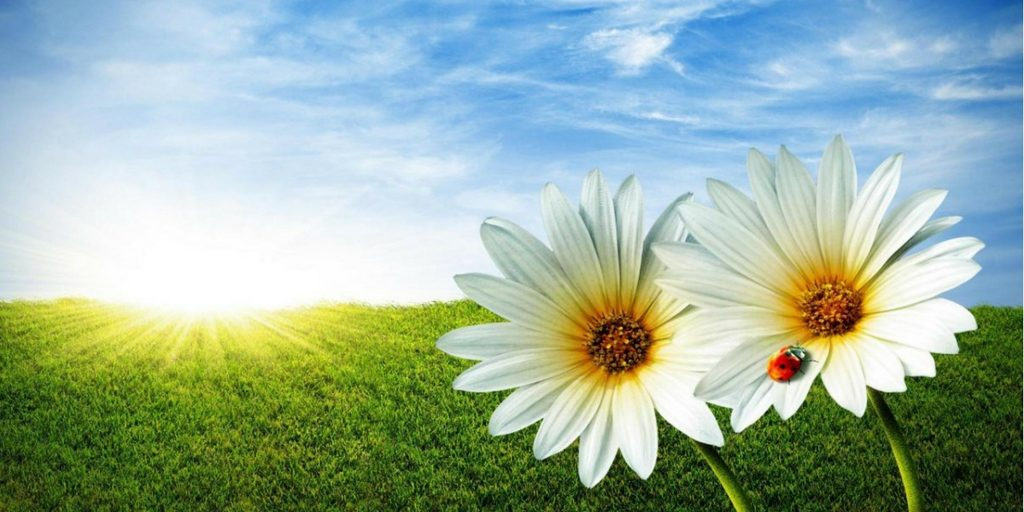 Prepara tu aire acondicionado para esta primavera