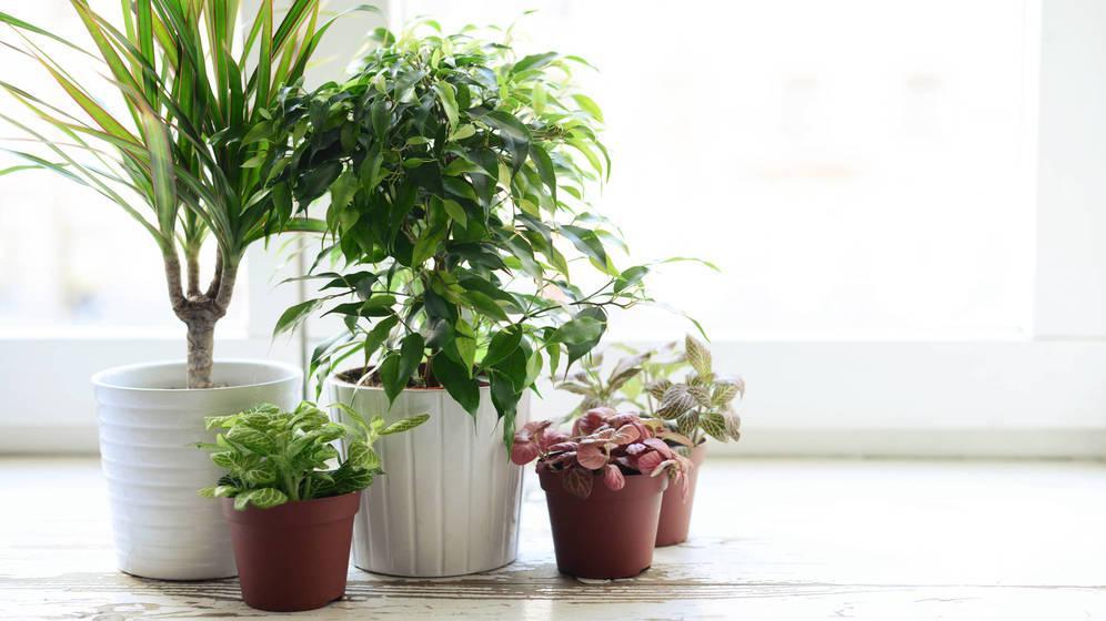 Plantas que limpian el aire de casa